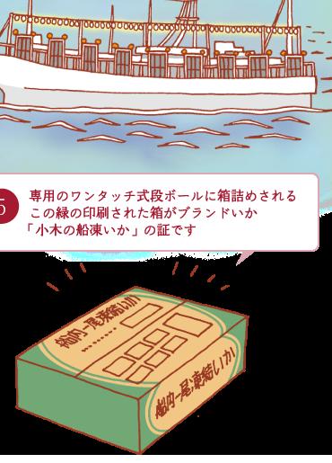 5.専用のワンタッチ式段ボールに箱詰めされるこの緑の印刷された箱がブランドいか「小木の船凍いか」の証です